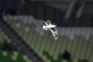 澳洲肉盾找不到一丝缝隙 只有海鸥和暴力鸟能飞过