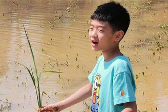杨阳洋下田学耕种