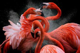 年度鸟类摄影师大赛获奖作品