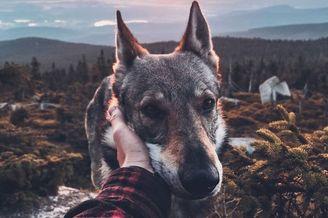 带着狼狗走入大自然