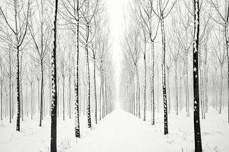 雪景与森林的简约组合