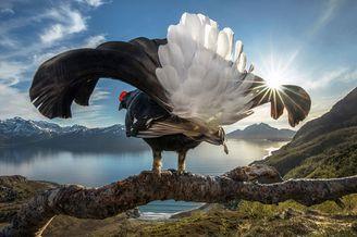 自然世界摄影大赛获奖作品欣赏