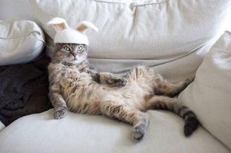 把猫掉的毛还给猫主子 来一顶毛茸茸的猫帽子