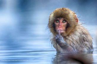 欢乐的动物世界 野生动物喜剧摄影奖