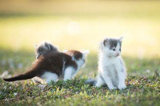 心都萌化了 测试镜头竟然拍这么可爱的小猫