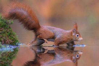 童话般的唯美动物 自然界的野生精灵
