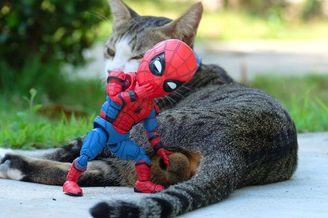 """漫威的新成员 """"蜘蛛侠""""与喵星人的日常"""