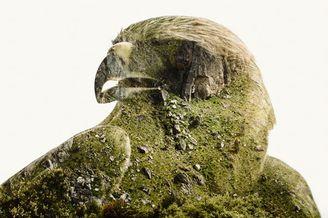 人文与天然的美好叠画 绿意盎然的创意拼贴