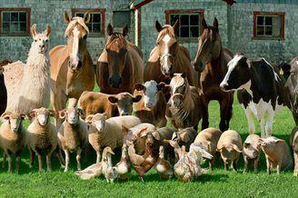 摄影师在农舍为动物拍摄肖像