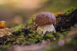 森林深处小巧可爱的蘑菇