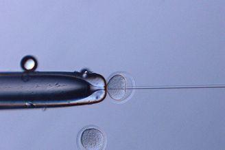 太空冷冻老鼠精子成功育出168只健康后代