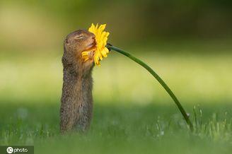 """春之气息悄然到来!奥地利地松鼠""""闻香识花""""萌化人心"""
