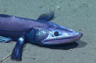 探秘千米深海邂逅众多神秘生物