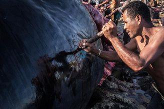 印尼小岛渔民捕捞鲸鱼遭非议