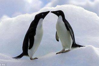七夕动物亲吻照爱意满满