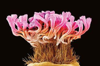 科学之美:显微镜下的植物生命