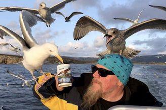 挪威海鸥爱喝茶