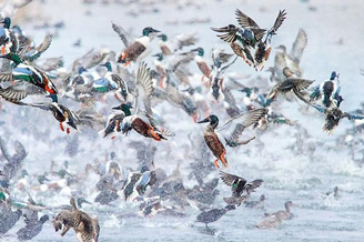 国际鸟类摄影师大赛佳作