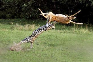围观动物界的战斗