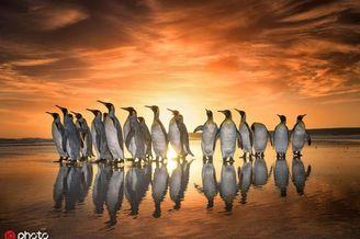 一起围观呆头鹅们的搞笑日常!