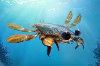 远古螃蟹外形怪异超级可爱