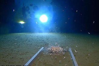 马里亚纳海沟11200米深处发现塑料袋和糖果纸