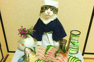 猫咪美食当前坐怀不乱超淡定