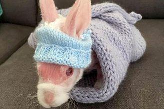 粉红萌兔因罕见病症天生无毛