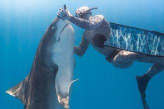 潜水员催眠凶狠虎鲨盘成玩具
