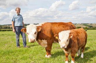 罕见迷你奶牛身高仅一米