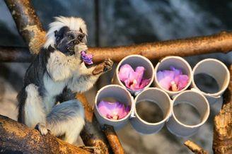 都是灵长类动物 怎么人类喜欢吃瓜 毛猴喜欢吃花?