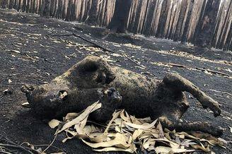 大火肆虐的澳洲袋鼠岛触目惊心