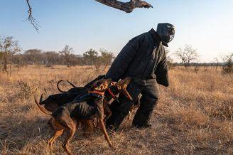 狗狗练习成侍卫保护濒危犀牛