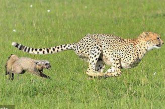 动物世界反转剧
