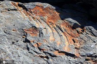 俄罗斯考古学家发现鱼龙化石