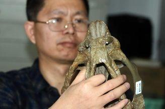 中国发现2.5亿年九峰吐鲁番兽