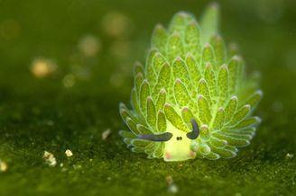 世界野生动植物