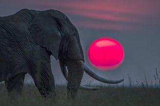 肯尼亚日出日落美景