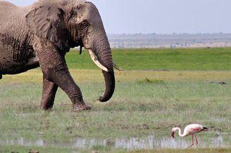 肯尼亚发起大象命名活动