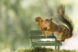 瑞典红松鼠夏日消暑大作战