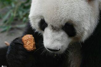 小动物也吃月饼,味道真香!