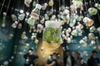 走进中国第一个种子博物馆