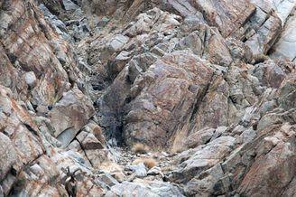 你能找出雪豹在哪吗?