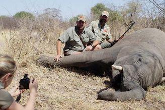 南非圈养濒危动物供猎手杀戮