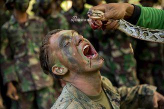 美大兵在印尼學習叢林生存技能