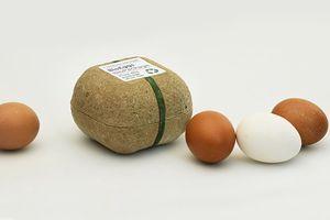 鸡蛋盒也能种蔬菜