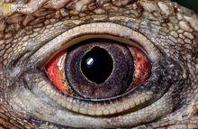 这是谁的眼睛?多样花纹绚丽色彩展现进化奇迹
