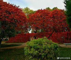 校园里的秋天。[耶] http://t.cn/R2dblMR 