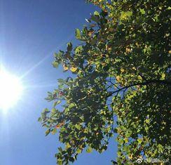 [微风]叶子由绿变黄,只需一个秋。