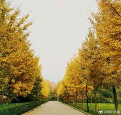 昨夜的风飘走了红叶,留下的只是枯萎的树干,美景鸿城永远美在一时,而清晨的风还是伴随一丝冷。 http://t.cn/Rqv8hyT 